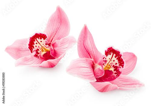Foto auf AluDibond Orchideen Orchid flowers