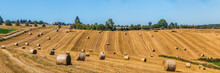August Summer Countryside Landscape Panorama Wit Straw Bales On