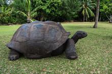 Seychellen - Riesenschildkröte Auf Curieuse