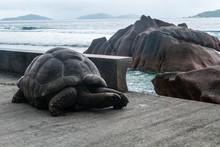 Seychellen - Riesenschildkröte Auf La Digue