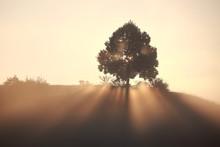 Sonnensrahlen Treffen Durch Einen Baum Auf Einem Hügel