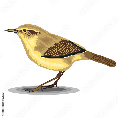 Fotomural Wren bird isolated on a white background. Realistic illustration.