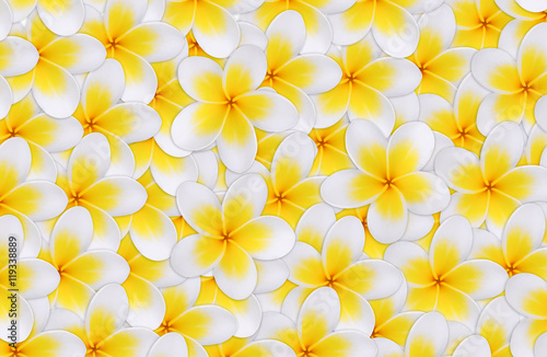 Foto op Canvas Frangipani seamless of tropical flowers frangipani (plumeria) for backgroun