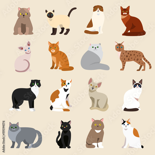 Fotografie, Obraz  Cat breeds cute pet animal set vector illustration