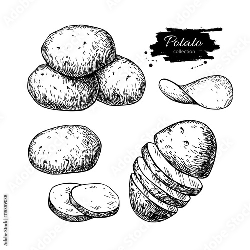 Fototapeta Potato drawing set. Vector Isolated potatoes heap, sliced pieces