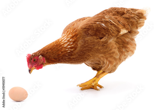 Photo sur Aluminium Poules Brown hen and egg.