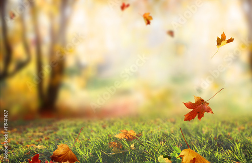 Aluminium Prints Autumn Beautiful landscape with yellow trees,green grass and sun.