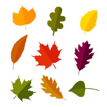 Autumn Leaves Set In Flat Style. Isolated On White Background. Vector Illustration.