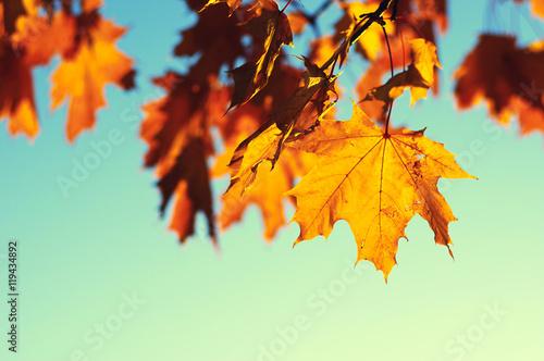 autumn leaves on sky Wallpaper Mural