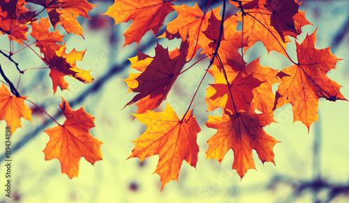 Photo  autumn leaves on sky