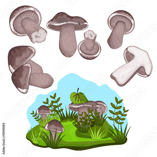 Photo Blewits mushroom set isolated on white background vector illustration