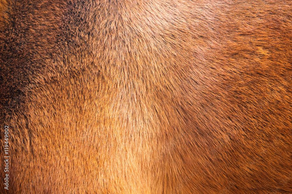Fototapeta natural fur texture background