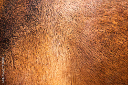 Photo sur Toile Les Textures natural fur texture background