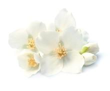 Jasmin White Flowers