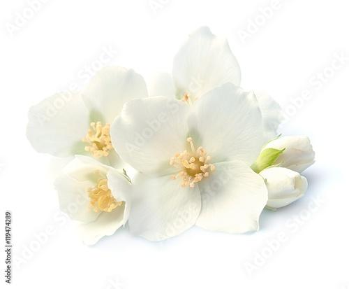 Photo  Jasmin white flowers