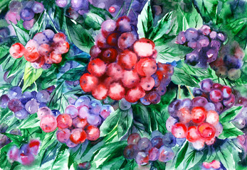 FototapetaWatercolor painting. Red berries of rowan and green leaves.