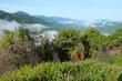 Chong Yen, Mae Wong National Park, Thailand, the beautiful fores