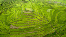 Beautiful Rice Terraces From Above In Thanh Hoa, Vietnam