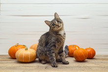 Cute Stripes Cat And Pumpkin On A Wooden Table On A Background O