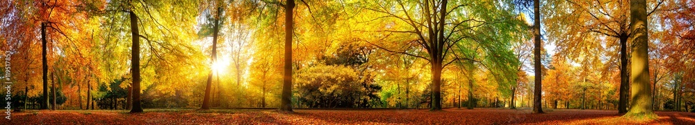 Fototapeta Extra breites Panorama von einem malerischen Wald im Herbst bei goldenem Sonnenschein