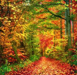 FototapetaFarbenfroher Wald im Herbst lädt zu einem Spaziergang ein