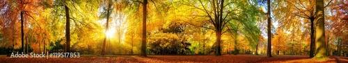 Foto op Plexiglas Honing Extra breites Panorama von einem malerischen Wald im Herbst bei goldenem Sonnenschein