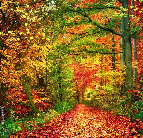 obraz lub plakat Farbenfroher Wald im Herbst lädt zu einem Spaziergang ein