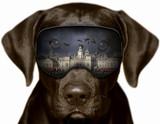 Fototapeta Londyn - Czarny pies w Londynie, fotomontaż