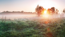 Country Meadow At Foggy Morning. Green Grass In Fog. Spring Landscape