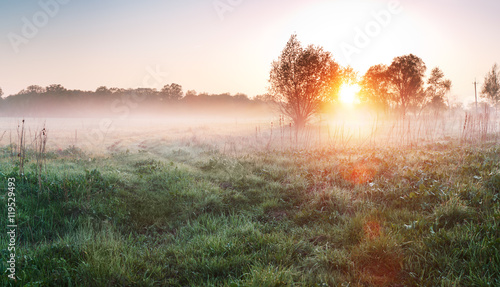 Photo Country meadow at foggy morning