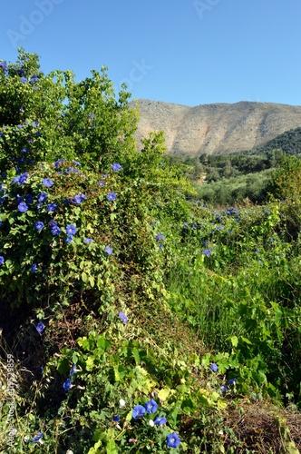 Fotografía  Beautiful flowers of garden