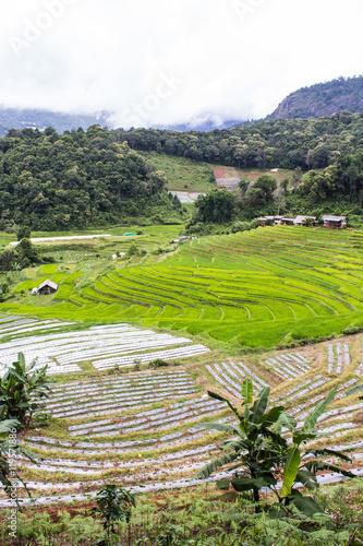 Canvas Prints Guilin Terraced Rice Field, Pha Mon Chiangmai Thailand