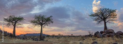 Printed kitchen splashbacks Baobab Sunset and Baobab (Adansonia digitata). Ruaha National Park. Tanzania