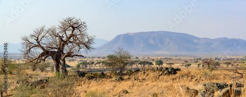 Spoed Foto op Canvas Baobab Landscape with Baobab (Adansonia digitata). Ruaha National Park. Tanzania