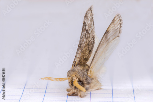 furry moth landed over the quad paper of a graph notebook