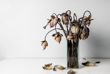 Withered Lotus Flowers In A Gl...