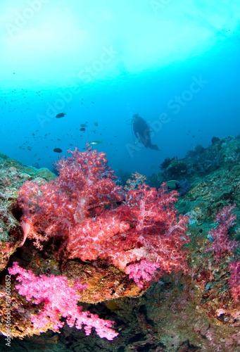 Scuba Diving on a colorful tropical Coral Reef , north andaman, Thailand