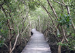Thailand, Phetchaburi Province, wood path through mangrove forest