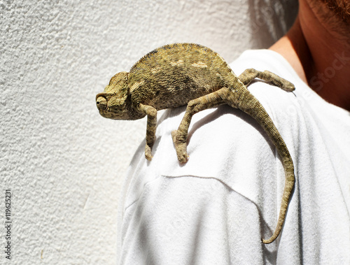 Chameleon in the shoulder