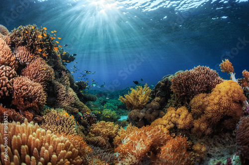 Door stickers Coral reefs Indonesia