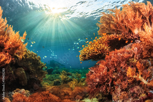 Photo sur Toile Recifs coralliens Reef