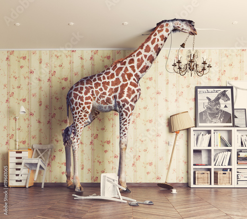 Fotografie, Obraz  giraffe  in the living room