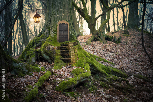 magic fairy forest Canvas Print
