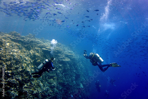 Foto op Canvas Duiken diver in clear water and school of fusiliers