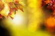 canvas print picture - Herbstblätter im Sonnenlicht.