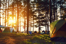 Camping And Tent Under The Pine Forest In Sunset At North Of Tha