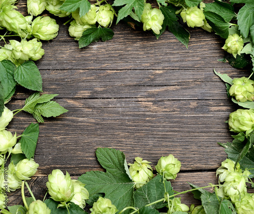 Hop Twig Over Old Wooden Table Background Vintage Style Beer
