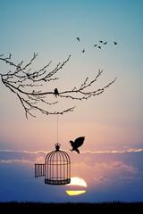 Fototapetabird cage on tree