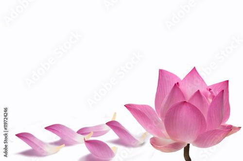 Poster de jardin Nénuphars Water lily flower (lotus)