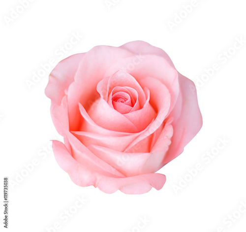 Fotografía Pink rose isolated on white background, soft focus.